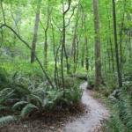 Carkeek Park forested trail