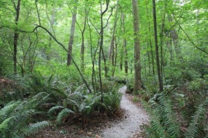Carkeek-Park-wooded-area-1